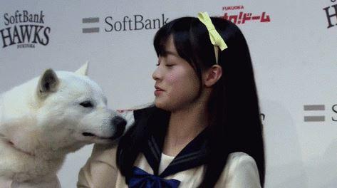 女優・橋本環奈に白い犬がすり寄る