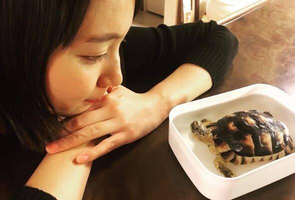 亀を観察する女優・吉岡里帆