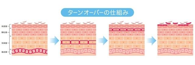 肌のターンオーバーを促進する
